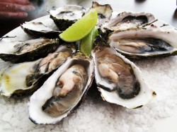 oysters-inhibit-the-conversion-from-test