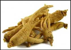 roots of korean ginseng