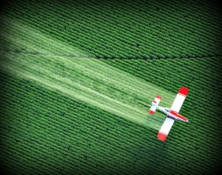 herbicides, fungicides, pesticides, and testosterone production