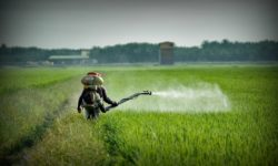 pesticides and testosterone levels